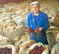 man with bags of peppers