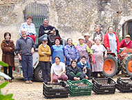 the can solivera team at the olive harvest